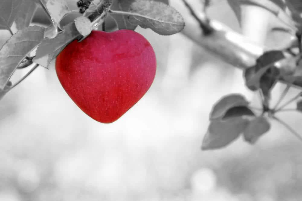 Mengkaji Perayaan Hari Valentine